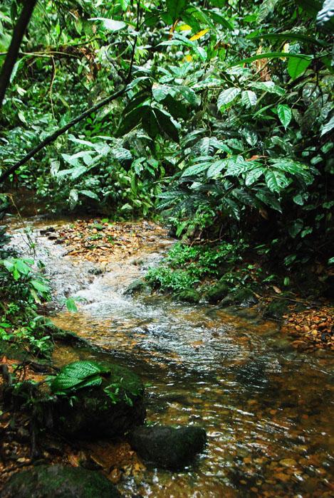 aliran sungai kecil yang airnya manis banget
