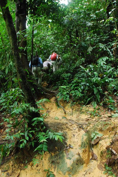 rute di Hutan