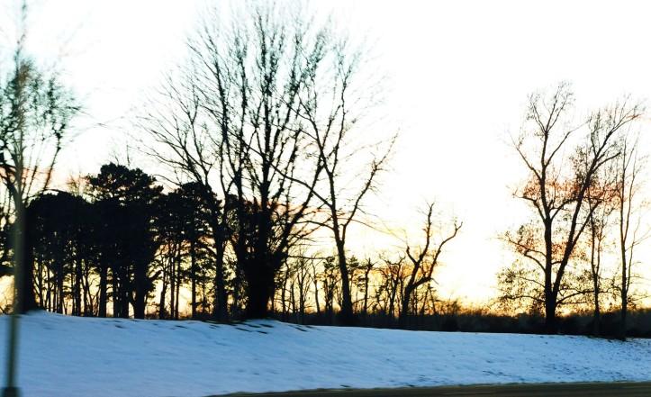 matahari sore dari sela-sela ranting pohon