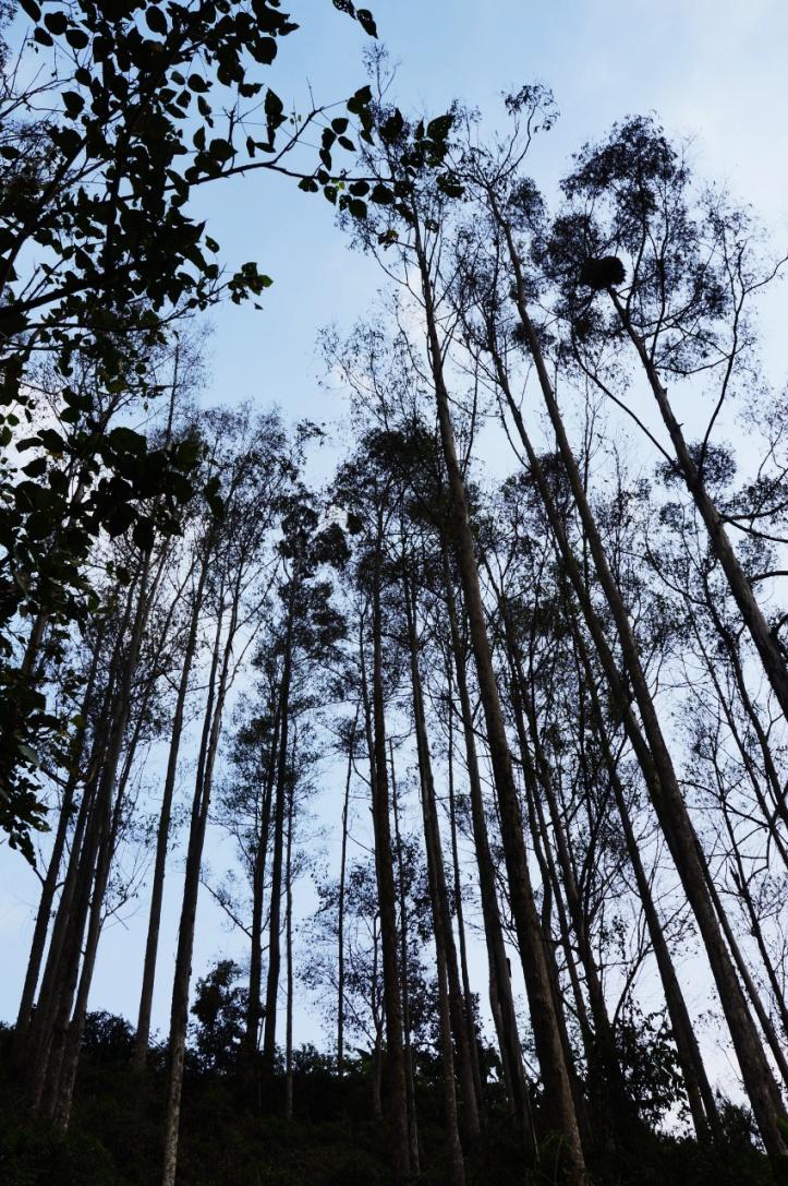 Hutan yang kering