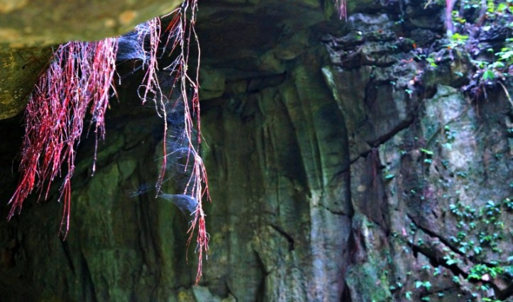Sarang laba-laba dibalik batu