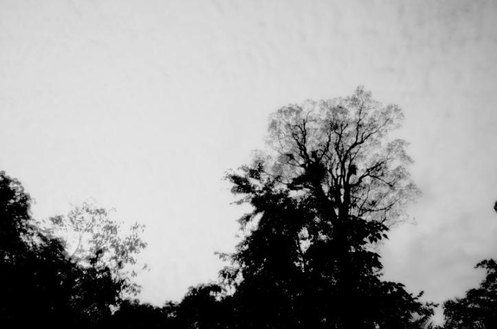 Pepohonan disekitarnya