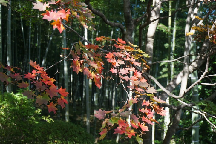 """""""I want to say something so embarrassing about September that even the leaves start blushing and turning red.""""  ― Jarod Kintz autum in Kyoto"""