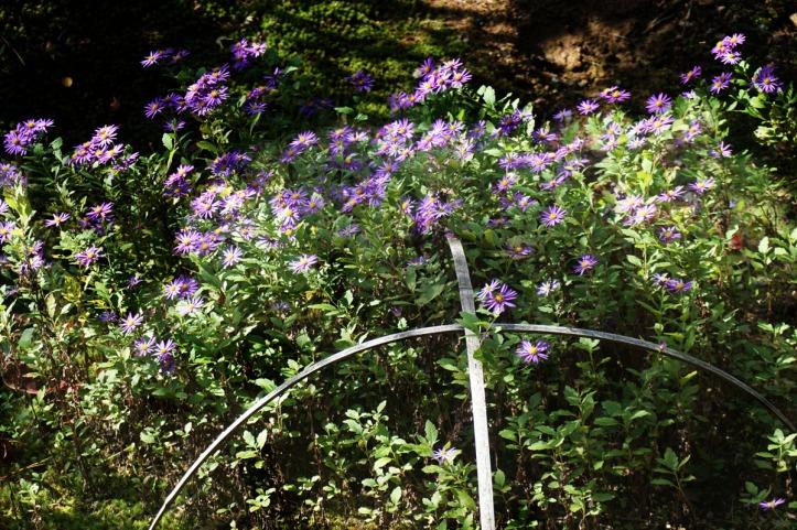 Bunga-bunga disekitaran hutan