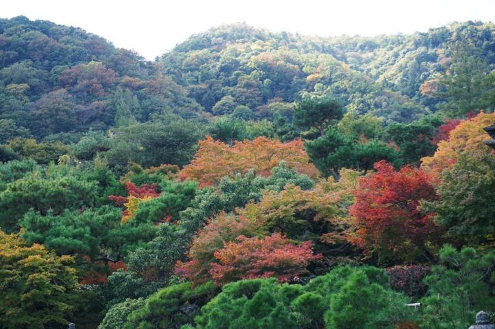 Memang belum semuanya merah tapi........yang begini aja udah sempurna, kan :) Alam selalu kasih kita kejutan, apapun musimnya.