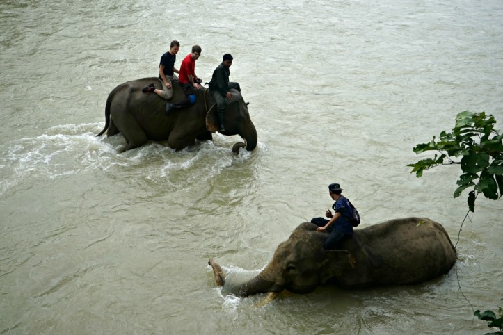 Seruu banget karena gajahnya suka banget mandi