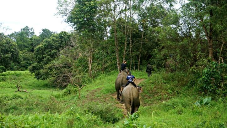 Iring-iringan gajah patroli