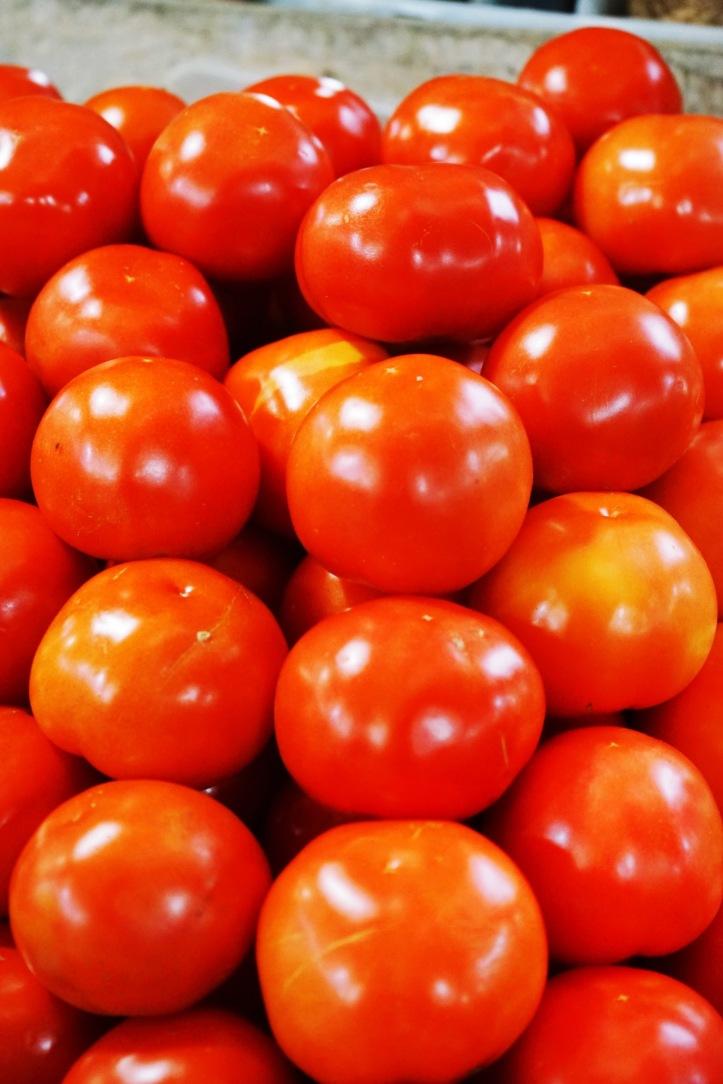 Tomat yang baru diambil dari kebun.