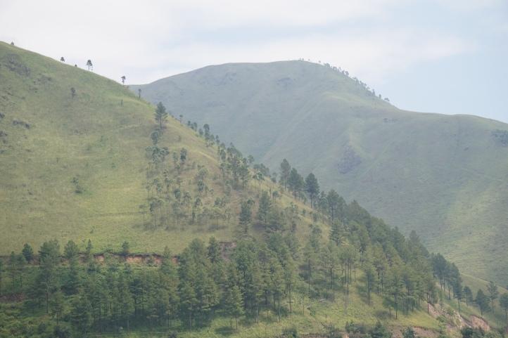 Jejeran pohon pinus di bukit. Pokoknya daerah ini wajib didatangin sebelum mati :)