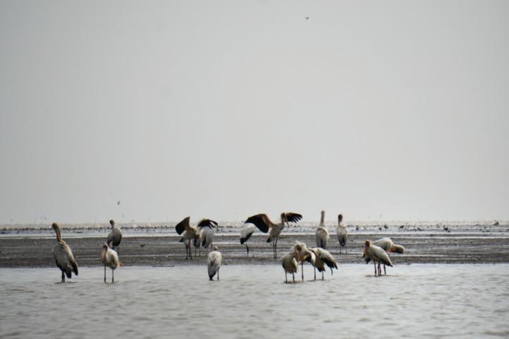 Sebagian burung yang bermigrasi