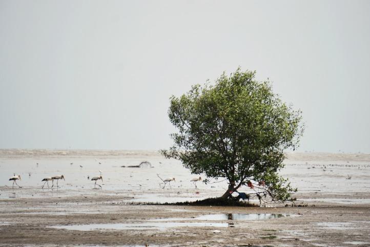 Pohon bakau dengan burung-burung kecil