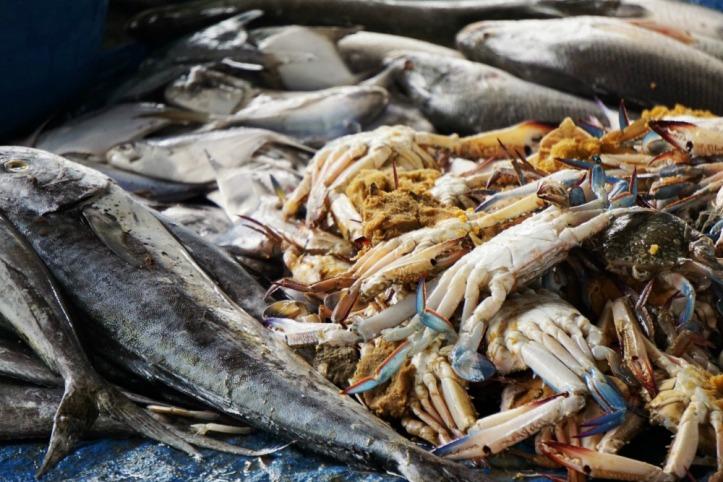 Ikan, kepiting dan banyak lagi