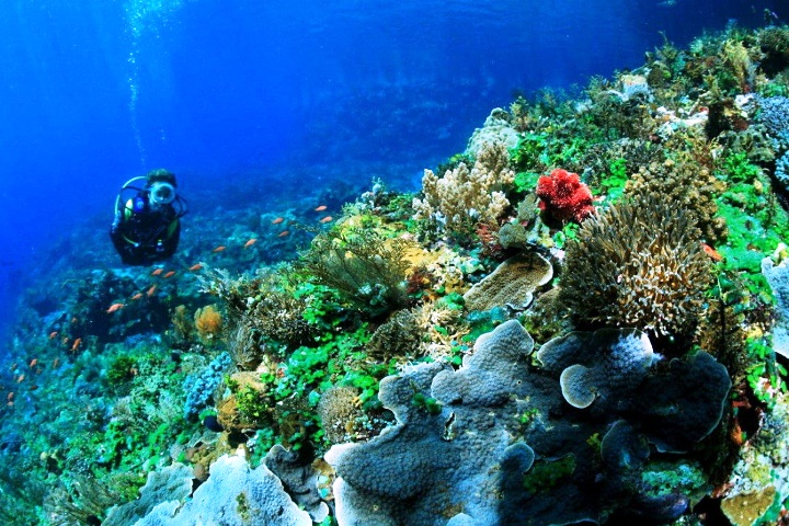 Pic source : syahrulanpuasawa.com