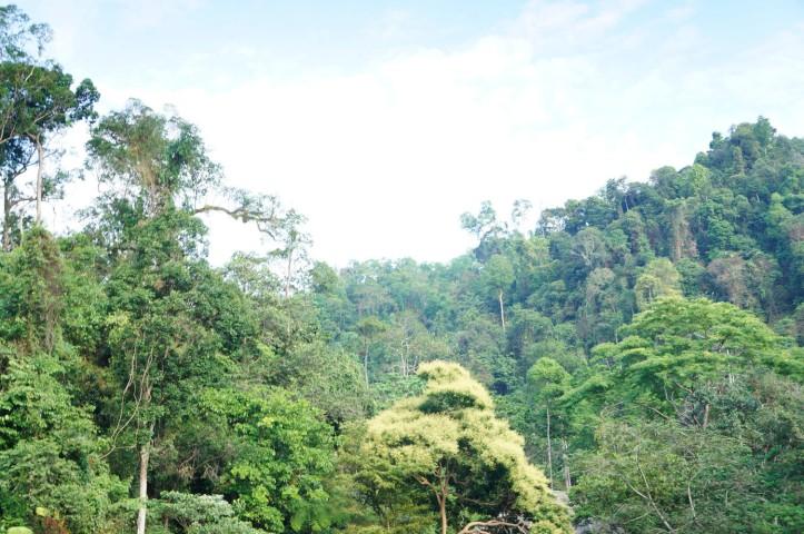 Sungai Landak - Bukit Lawang