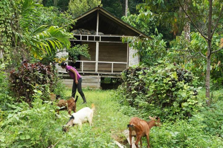 Beberapa rumah penduduk yang biasanya bekerja di kebun-kebun karet/sawit