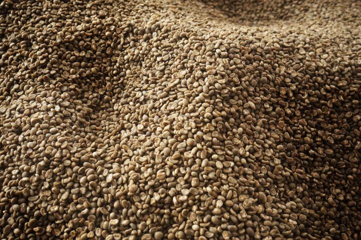 Coffee Tour Takengon Gayo - Aceh Tengah Coffee Bean yang siap di kirim