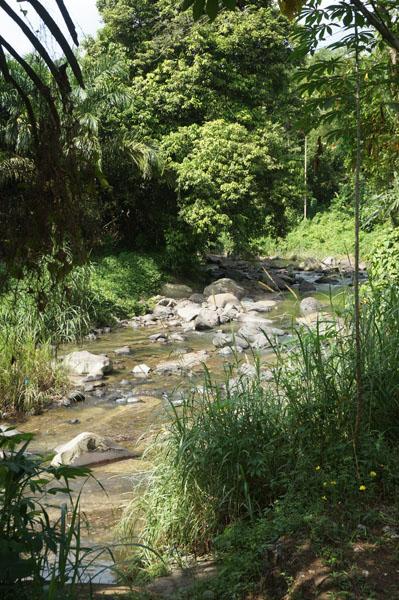 Sungai kecil. Kita diharuskan melewati sungai ini dan naik ke atas bukit untuk menuju Orangutan Haven