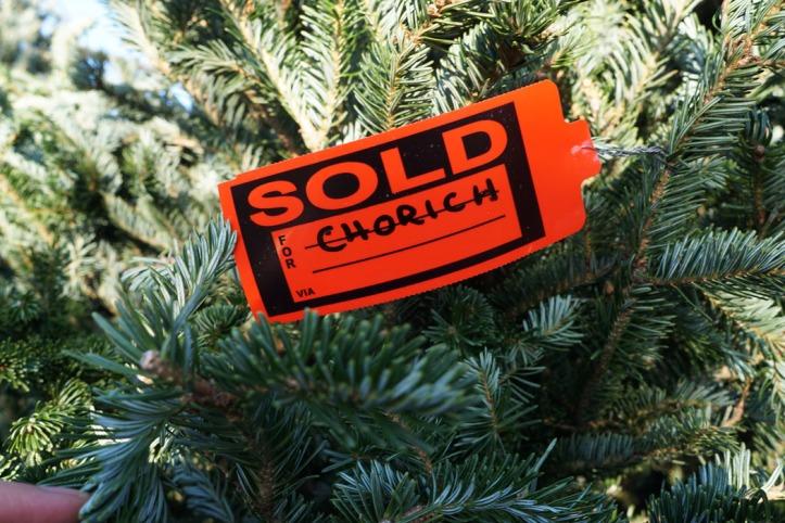 Ini pohon yang kita taksir tapi akhirnya terjual kepada Mr. Chorich