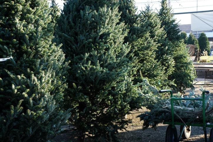 Deretan pohon natal