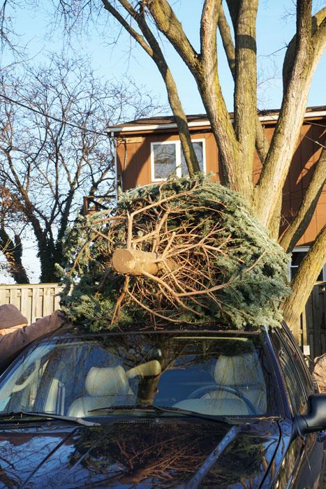 Cara membawa pohon