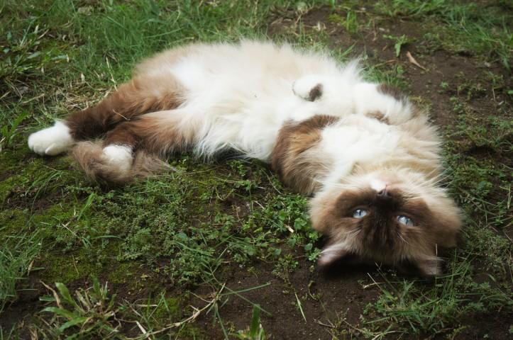 Gila ya cukup satu hari dia udah mulai ngulet-ngulet di tanah dan rumput