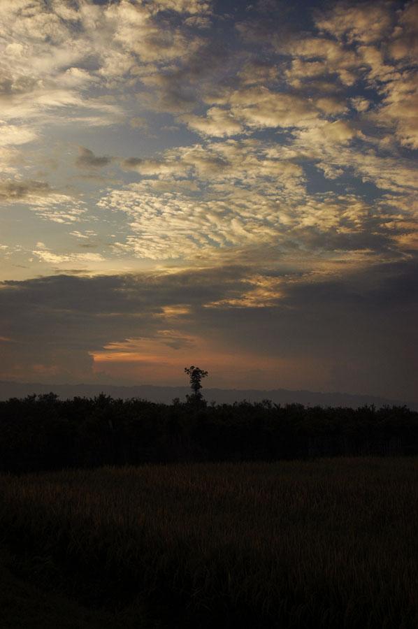 Sukamade Jawa Timur 5