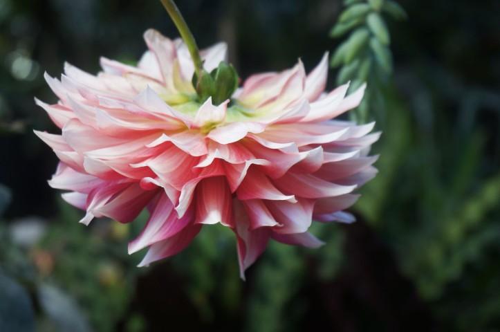 Bunga yang kebalik