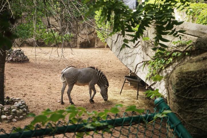 Zebra. Oya zebra ternyata ada beberapa jenis. Saya sampai lama banget berdiri dikandang mereka cuman buat nyari bedanya apaan sih hehe.