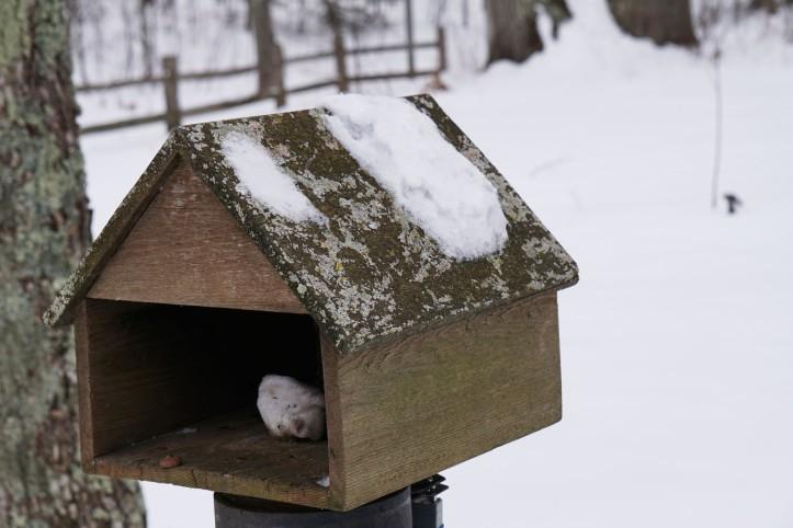 Bukan kabin tapi rumah burung/tupai atau kotak surat :)