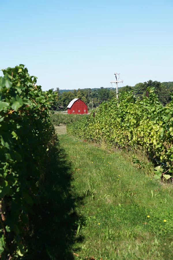 Barn ini kita temukan ketika wine tasting di Vineyard otw home.