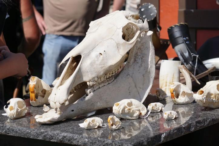 Ini dari stand tulang2 binatang gitu