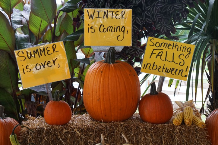 Pumpkins Jelas sudah ya penjelasannya hehe.