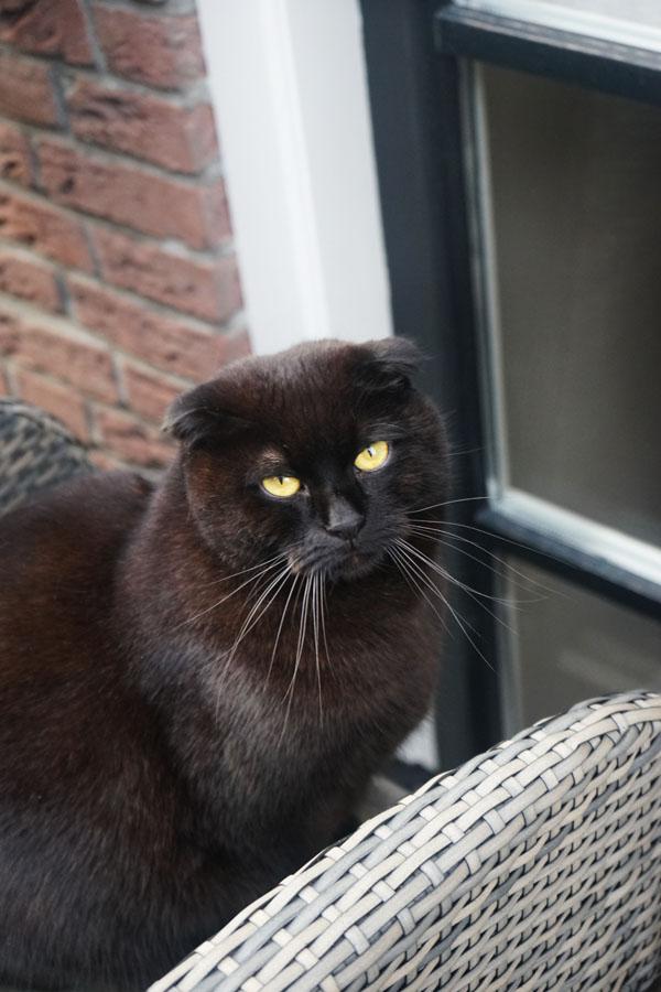 Cat in Marken Belanda