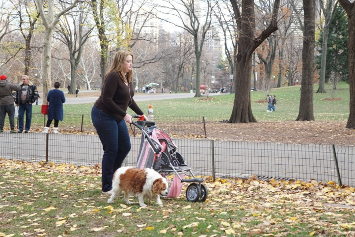 Banyak yang bawa Anjing juga untuk jalan-jalan disini