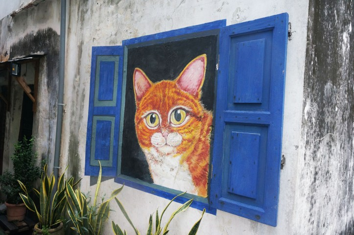 Cat and blue window