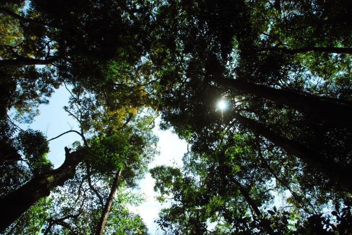 Orangutan Bukit Lawang North Sumatera