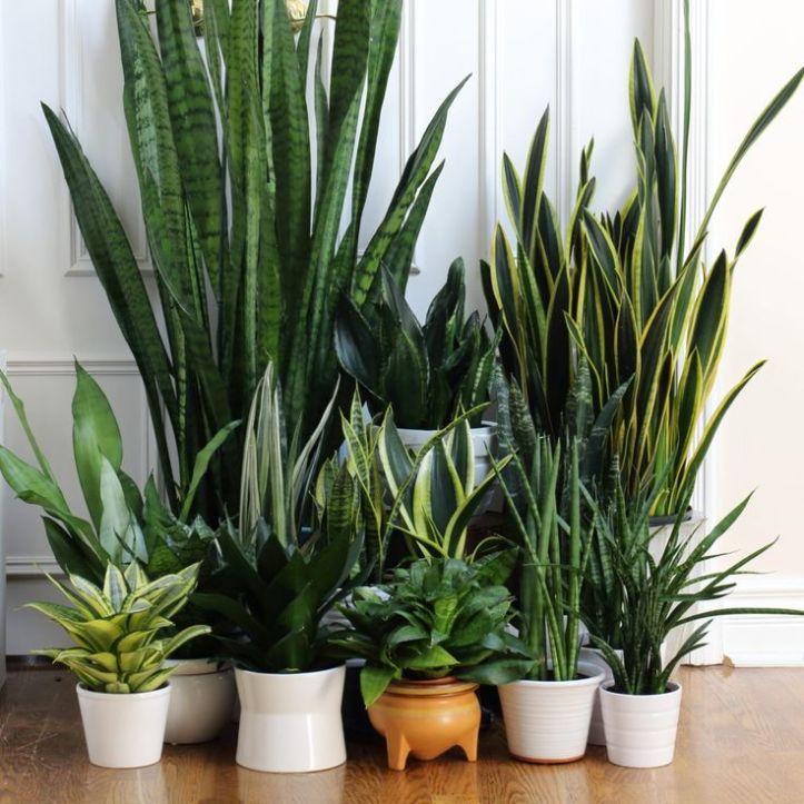 Hasil gambar untuk 5 tanaman yg bisa jadi pembersih udara